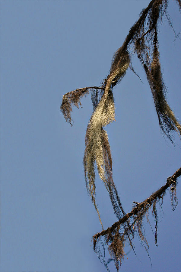 Moss Photograph - Strand Of Moss Swaying Gently With The Wind - Tiger Mountain Wa by Christine Till