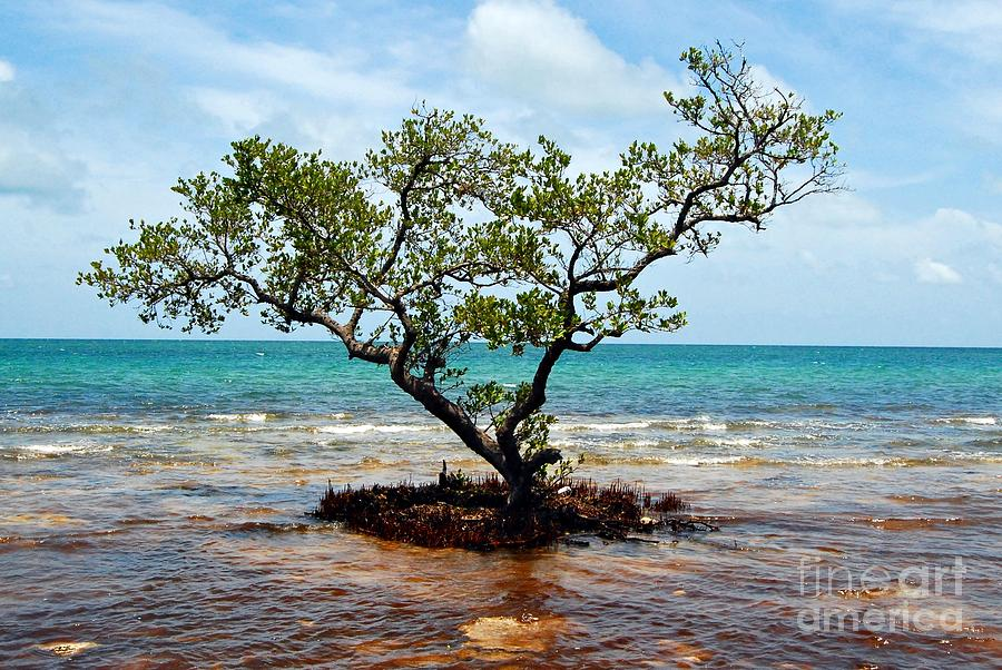 Key West Photograph - Stranded by Kendra Longfellow