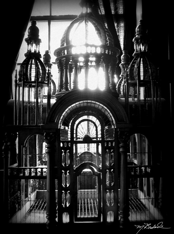 Cage Photograph - Strange Cage by Melissa Wyatt
