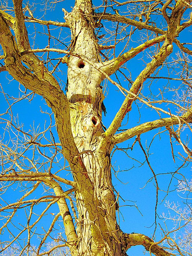 Strange Tree Photograph by Guy Ricketts