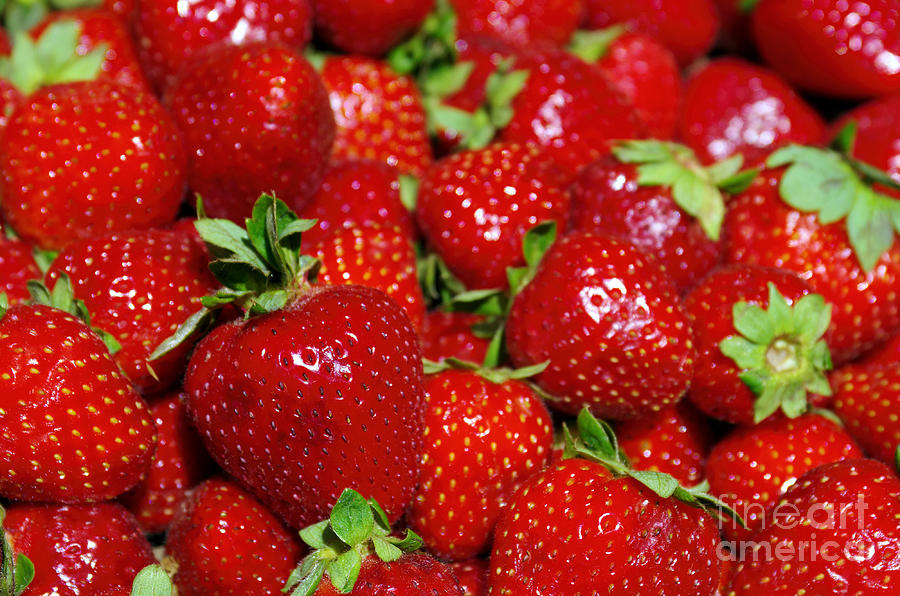 Agriculture Photograph - Strawberries by Carlos Caetano