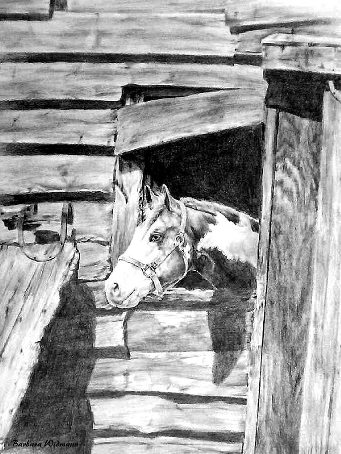 Horses Drawing - Strawberry by Barbara Widmann