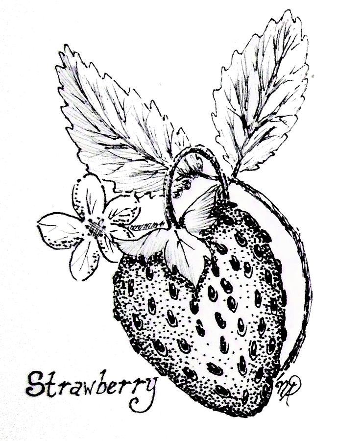 Strawberry Drawing - Strawberry Dreams by Nicole Angell