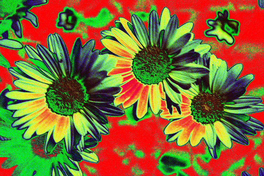 Straw Flowers Photograph - Strawflowers Against a Chritmas Background by Richard Henne