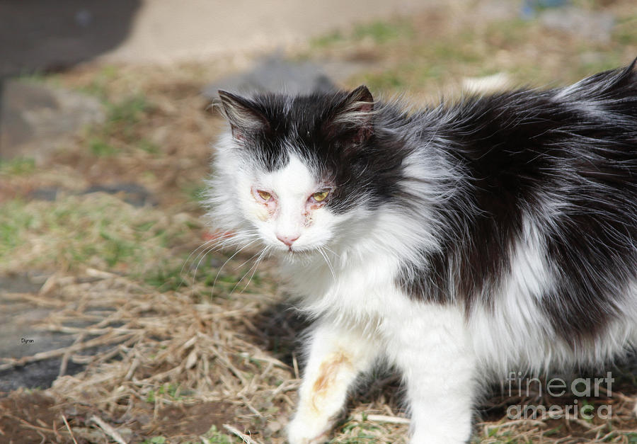 Cat Photograph - Stray Beauty  by Steven Digman