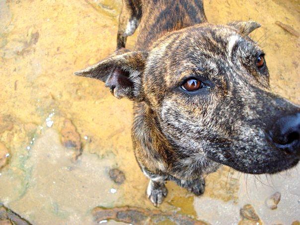 Dog Photograph - Stray by Britta Loucas
