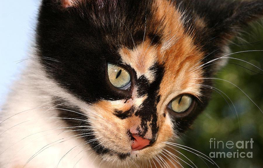 Cat Photograph - Stray Kitten by Steve Augustin