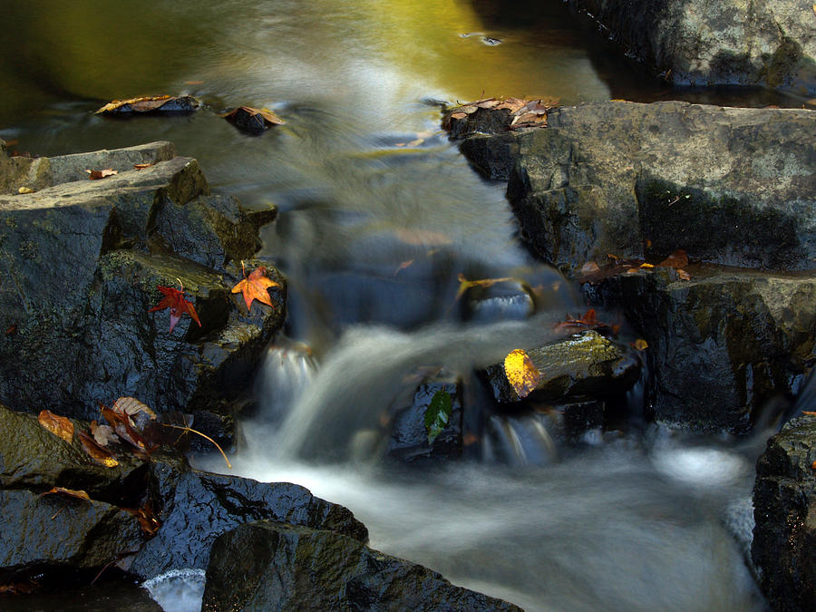 Stream Leaves by Don Keisling