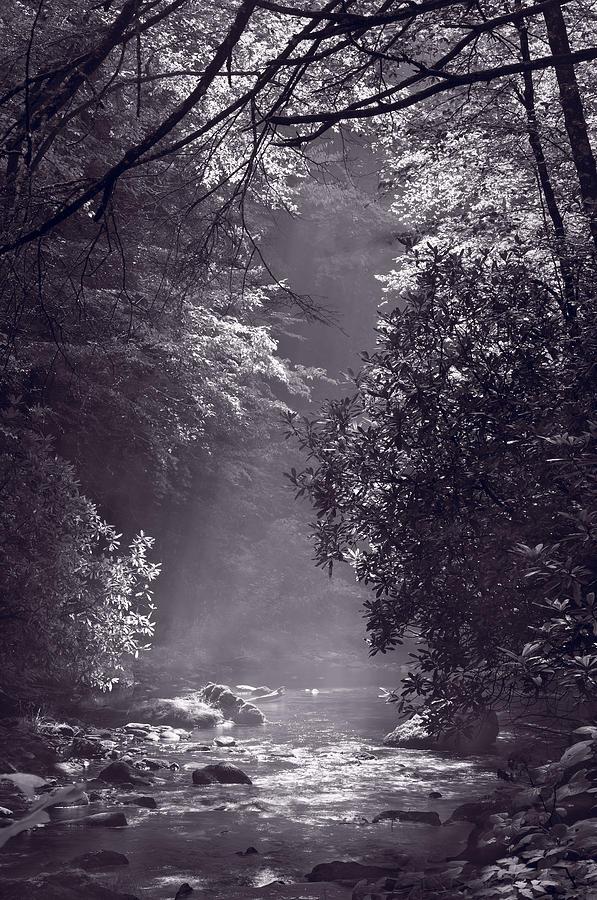 Blueridge Photograph - Stream Light B W by Steve Gadomski