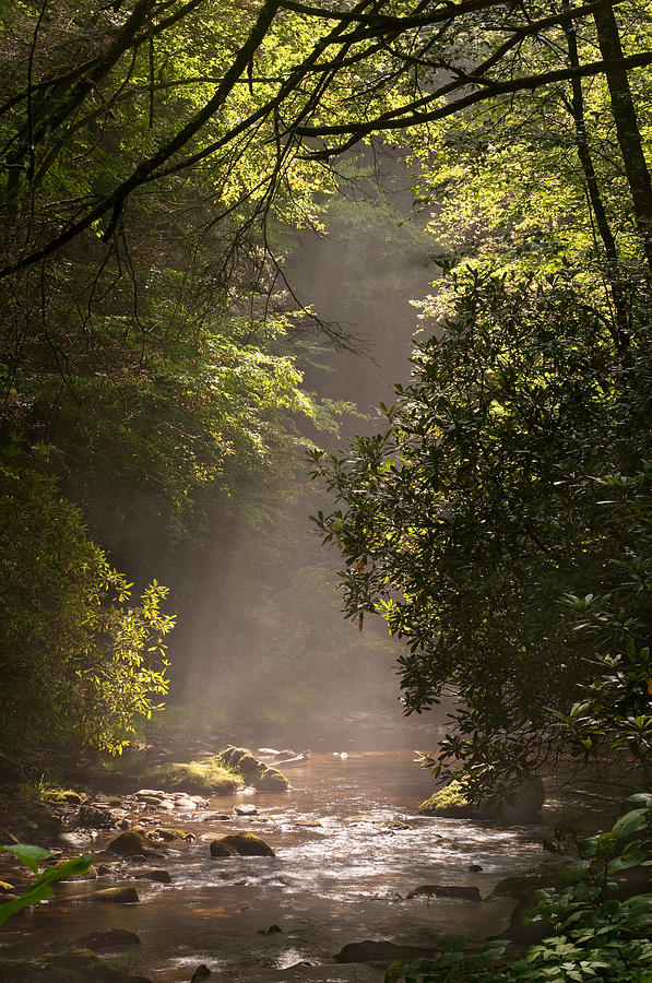 Blueridge Photograph - Stream Light by Steve Gadomski