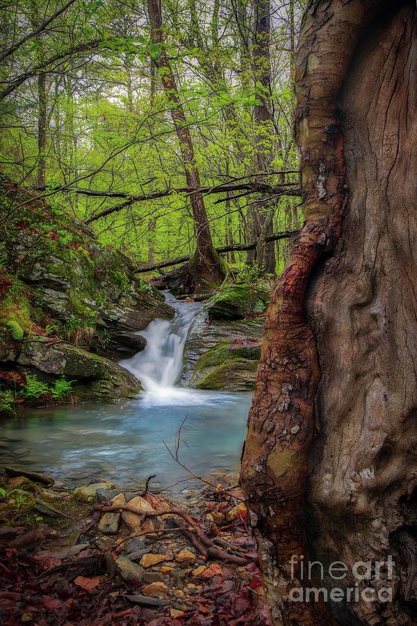 Stream Wonder by Larry McMahon