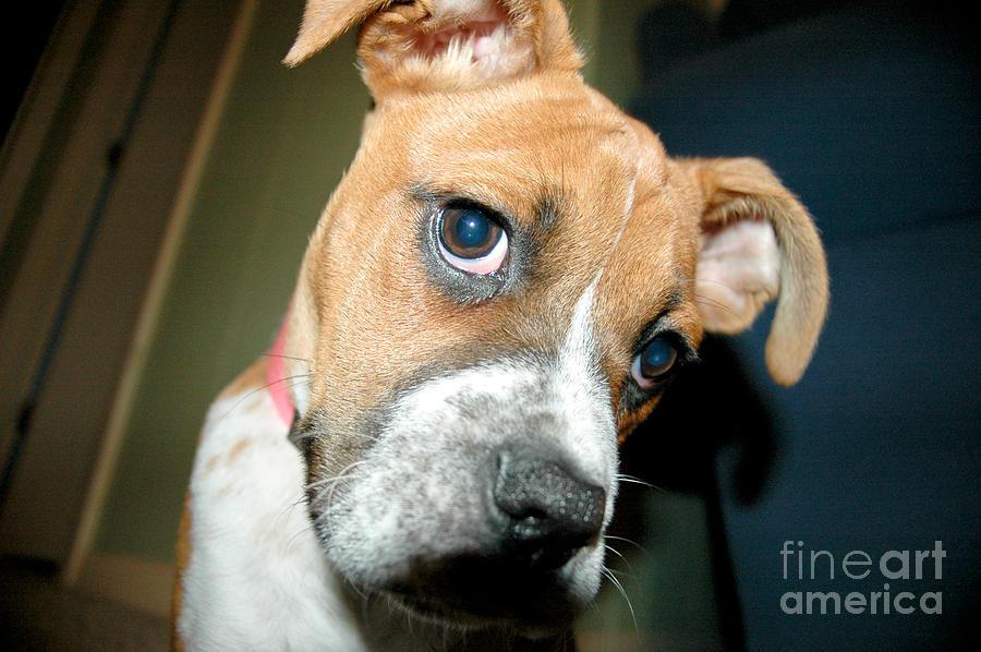 Dog Photograph - Strike A Pose by Maureen Norcross