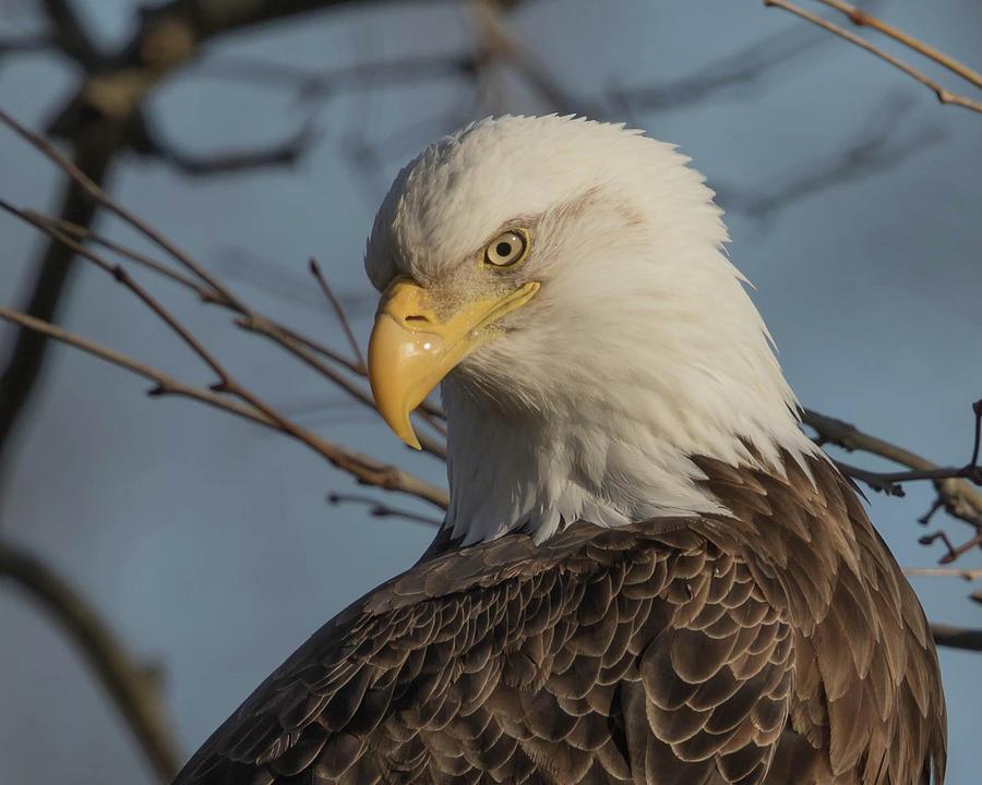 Eagle Photograph - Striking A Pose by Rhoda Gerig
