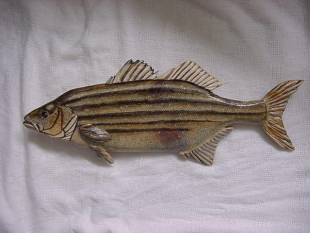 Aquatic Life Relief - Striped Bass-wooden- Living Waters Series  by Lisa Ruggiero