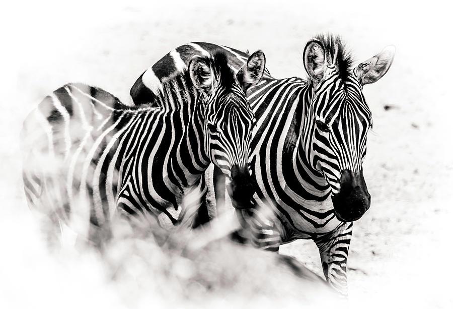 Stripes by Lev Kaytsner