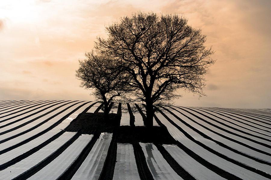 Photographer Photograph - Stripy Evening by Jez C Self