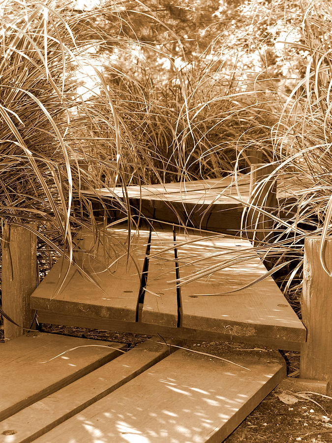 Sepia Photograph - Stroll Garden Walkway by Audrey Venute