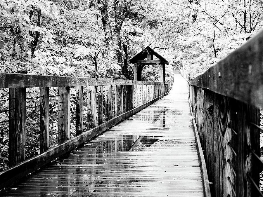 Rain Photograph - Stroll Through The Woods by Valeria Donaldson