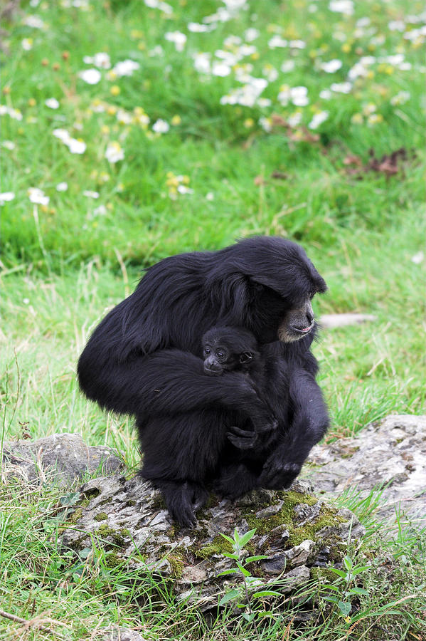 Strong Bond Between Mother And Monkey Photograph