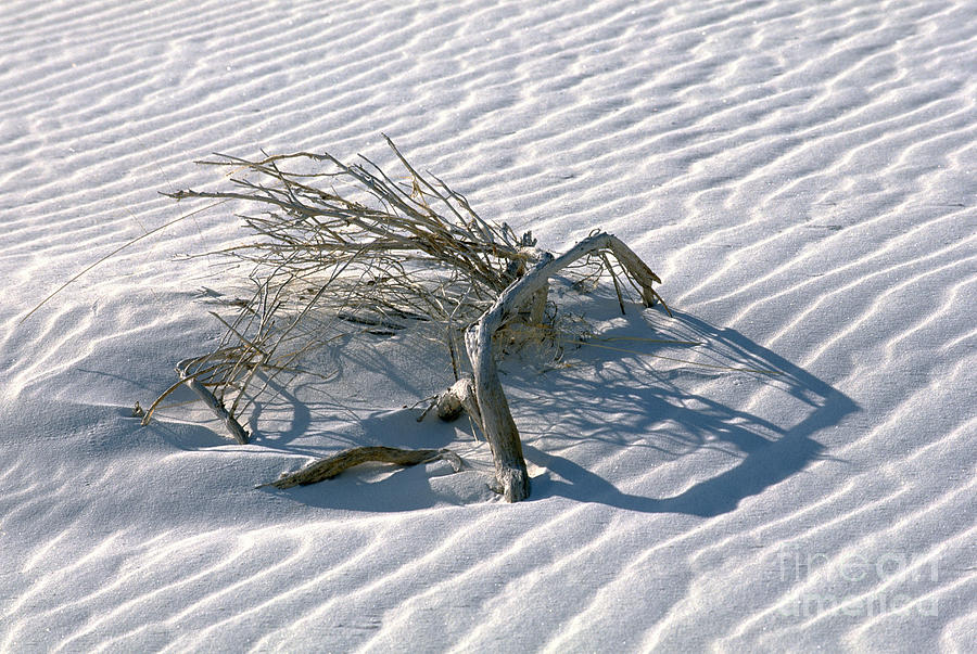 White Sands Photograph - Struggle To Survive by Sandra Bronstein