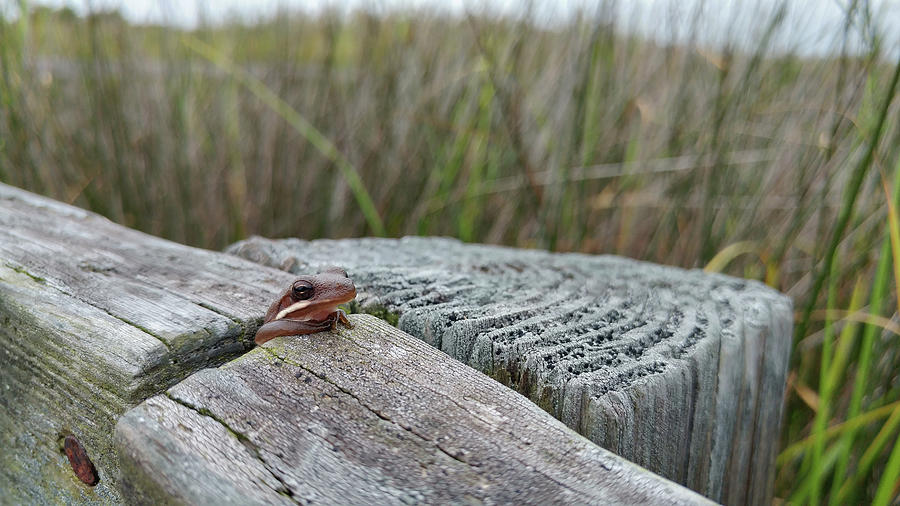 Amphibian Photograph - Stuck by Liza Eckardt