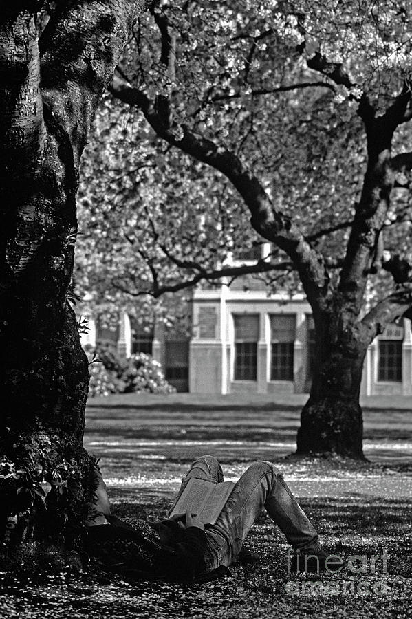 College Photograph - Student Reading Under Tree by Jim Corwin
