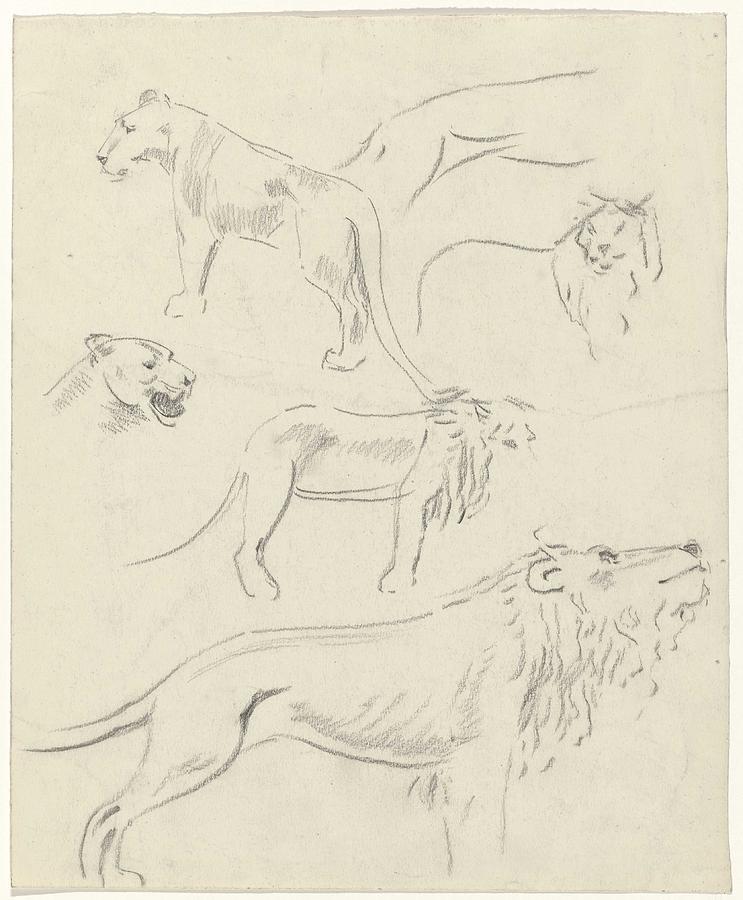 Studies Of Lions, Carel Adolph Lion Cachet, 1874 - 1945 Painting