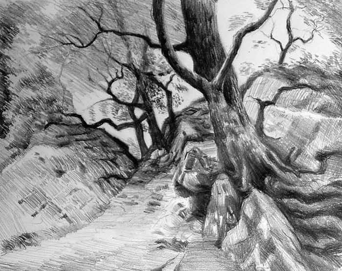 Study In Trees Drawing by William Hay