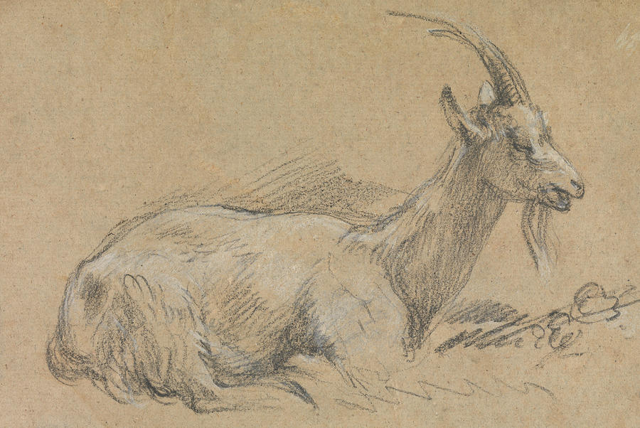 Study Of A Goat by Thomas Gainsborough