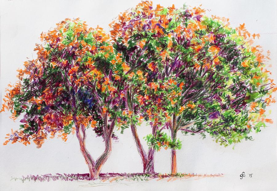 Study Of A Golden Rain Tree Drawing by Glenn Boyles