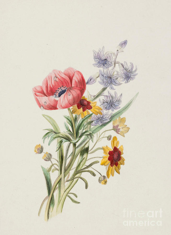 Study Of Wild Flowers Painting By English School