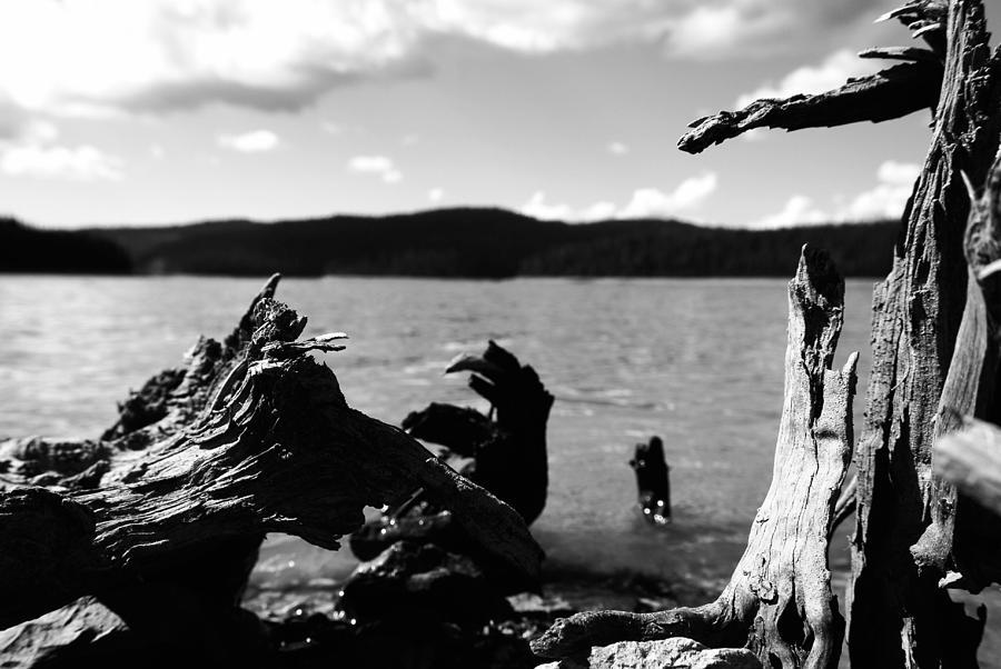 Stump Photograph - Stump Lake by Tom Melo