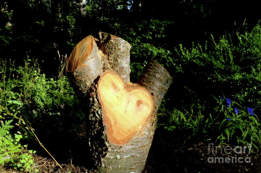 Stumps Photograph - Stump Shaped Like A Heart by Ruth Housley