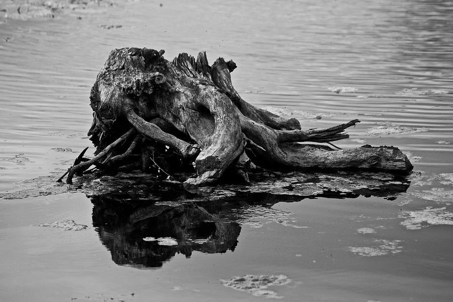 Stumped Photograph