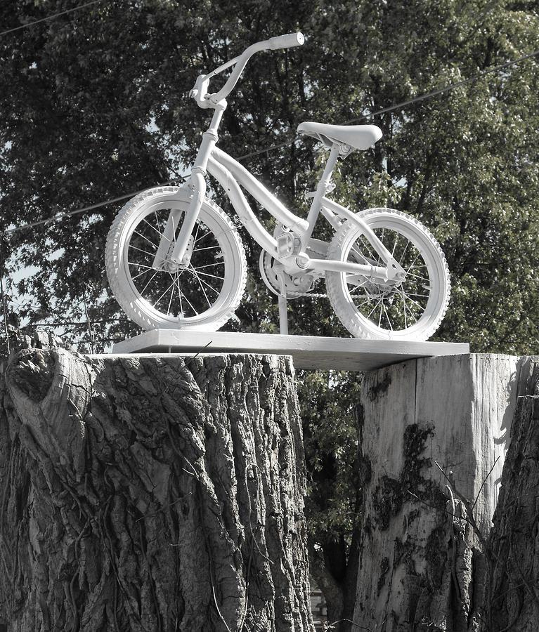 Tree Stump Photograph - Stumped by Kristie  Bonnewell