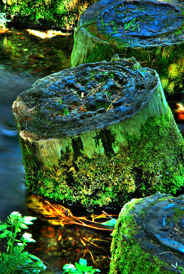 Stump Photograph - Stumped by Tom Melo