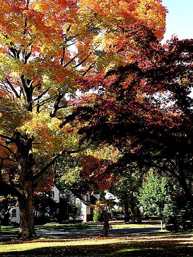 Autumn Photograph - Suburban Autumn by Susan Savad