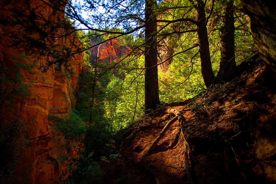 Outdoor Photograph - Subway Forest by Chad Dutson