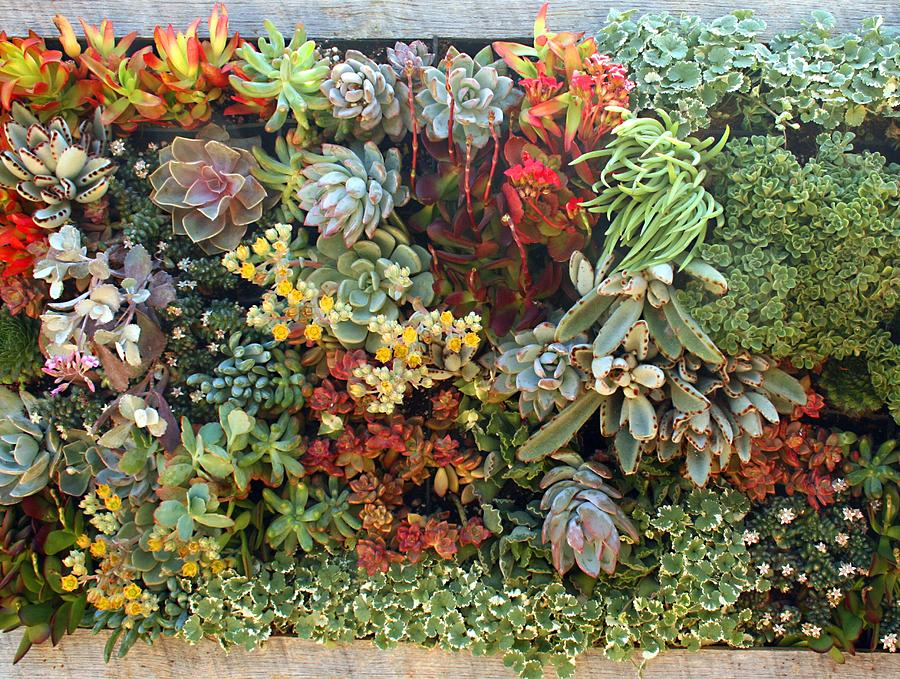 Succulent Garden 2 by Ellen Henneke