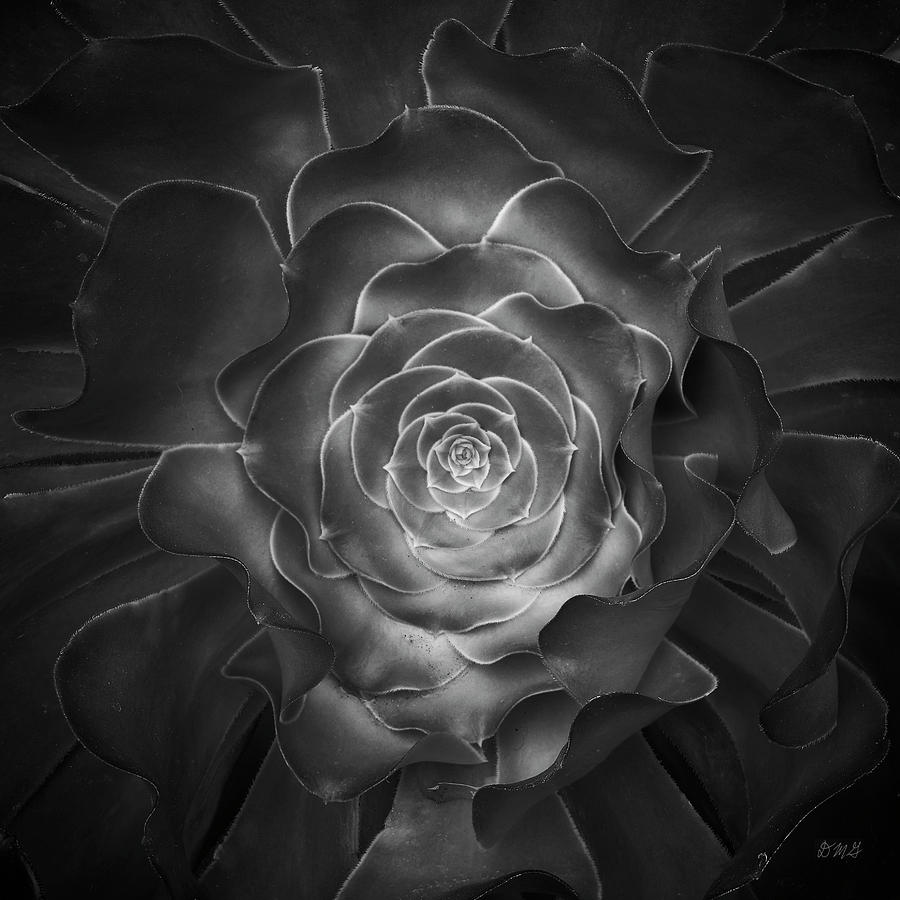Plant Photograph - Succulent I Bw by David Gordon