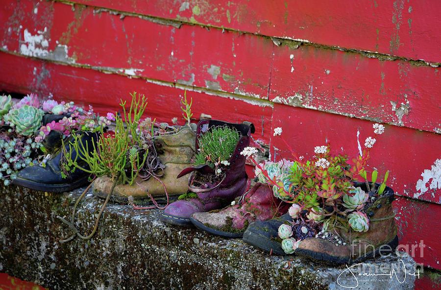 Succulent Kiwi Shoes by Joanne West