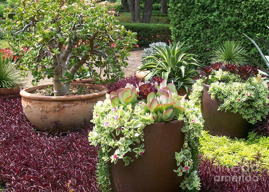 Succulent Photograph - Succulents by Laurie Eve Loftin