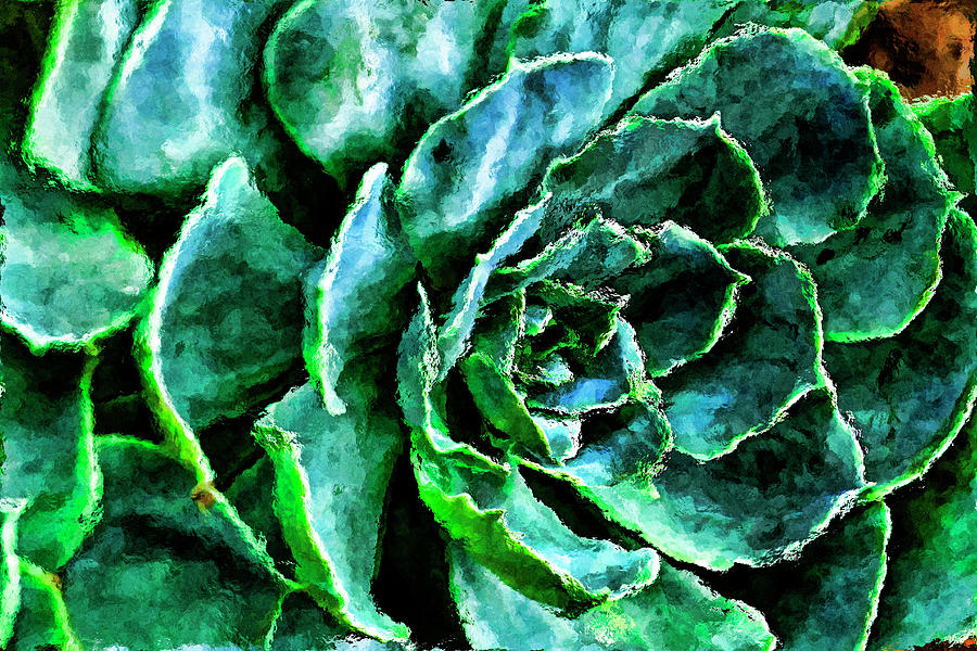 Recent Photograph - succulents Rutgers University Gardens by Geraldine Scull