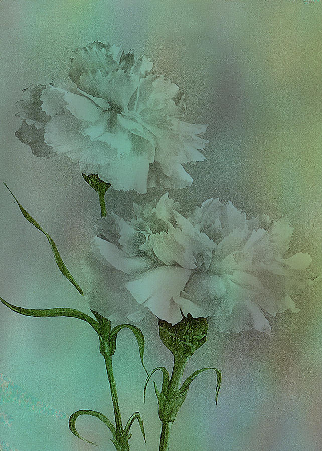 Flowers Digital Art - Such Serviceable Flowers by Sarah Vernon