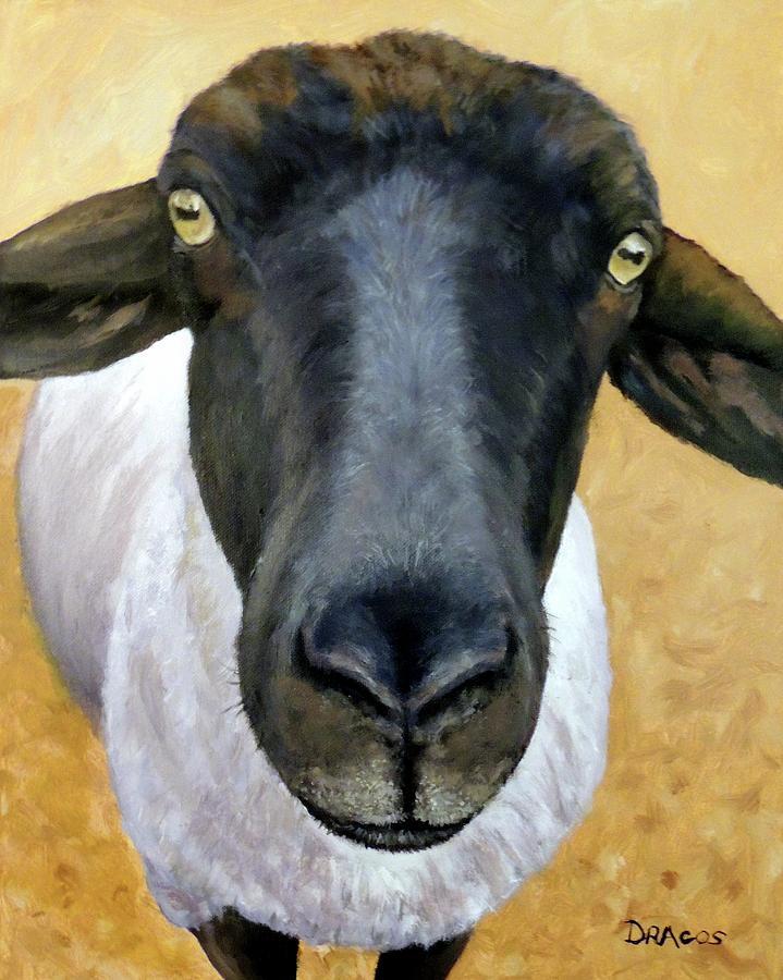 Suffolk Sheep Gold