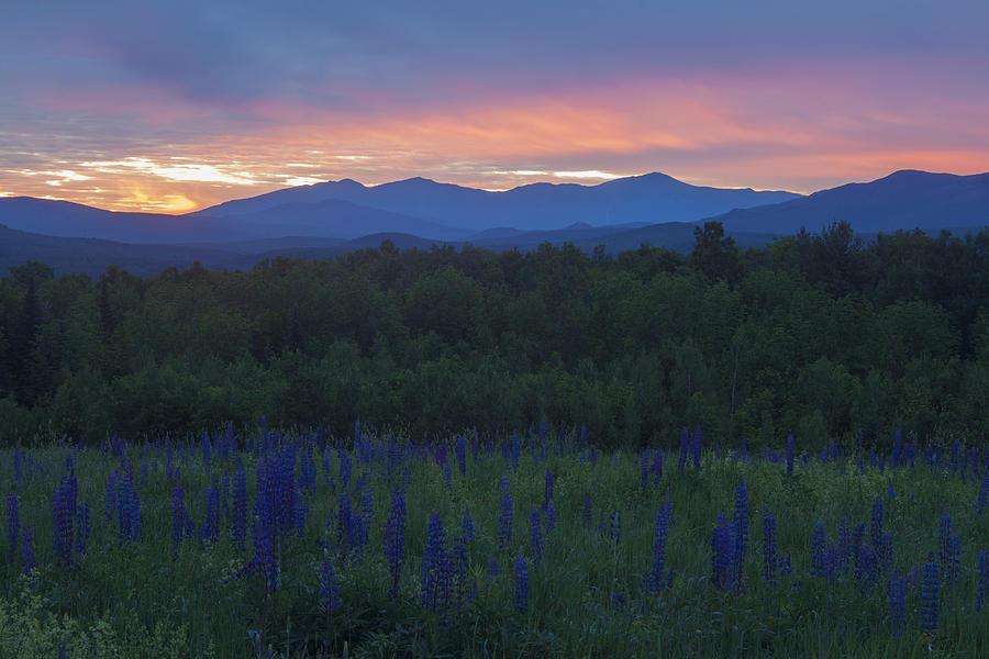 Mount Washington Photograph - Sugar Hill Lupines And Presidential Range At Dawn by John Burk