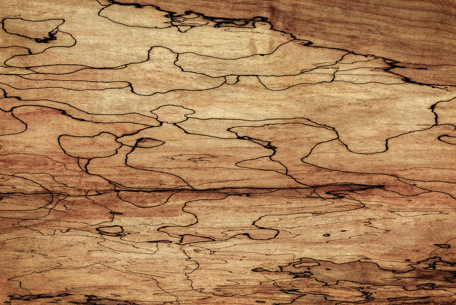Sugar Maple Wood ~ Sugar maple spalted wood grain pattern photograph by phil