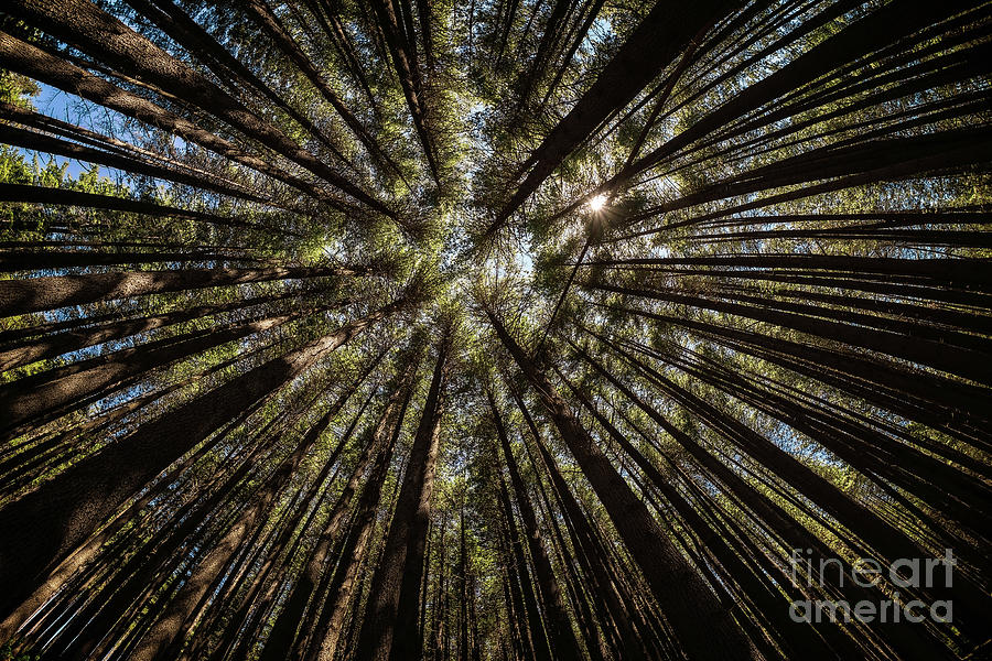 Sugarpine Fisheye by Paul Woodford