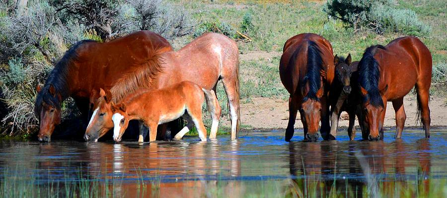 Wild Horses Photograph - Summer And The Living Is Easy by Jeanne  Bencich-Nations