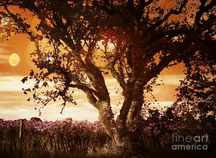 Nature Photograph - Summer Blaze by Leslie Hunziker